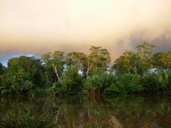 Parques naturales en la Isla de Borneo. Malasia