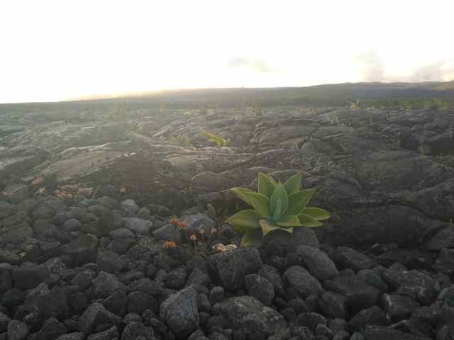 Lava Viewing Area (Big Island)